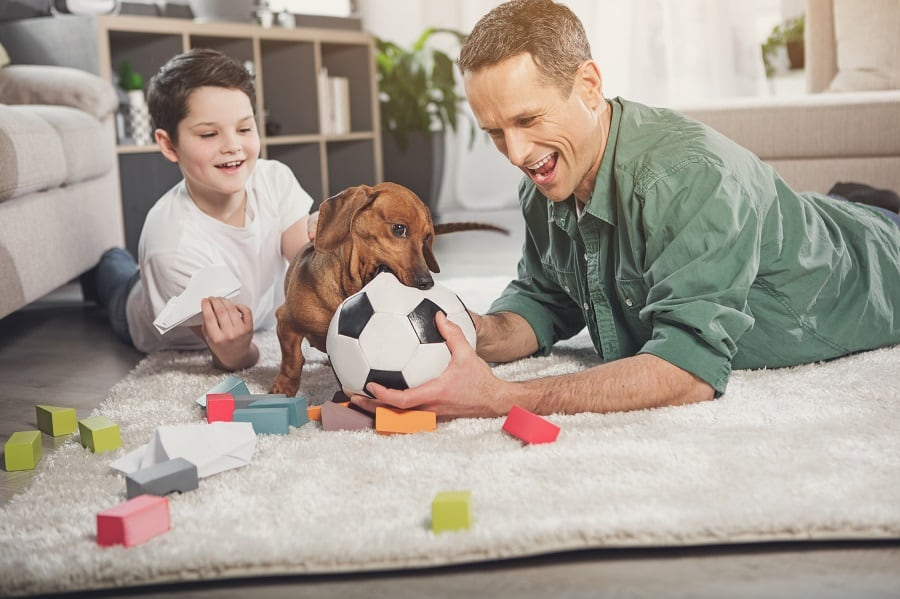 Father and son playing with dachshund at home
