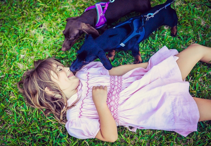 Dachshund sniffing a little girl's face