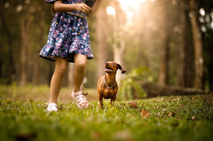 girl running and playing with dog
