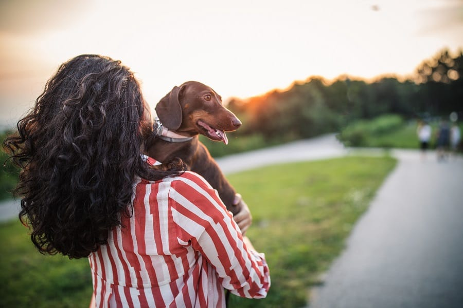 girl looking away to stop her dachshund from excessive licking