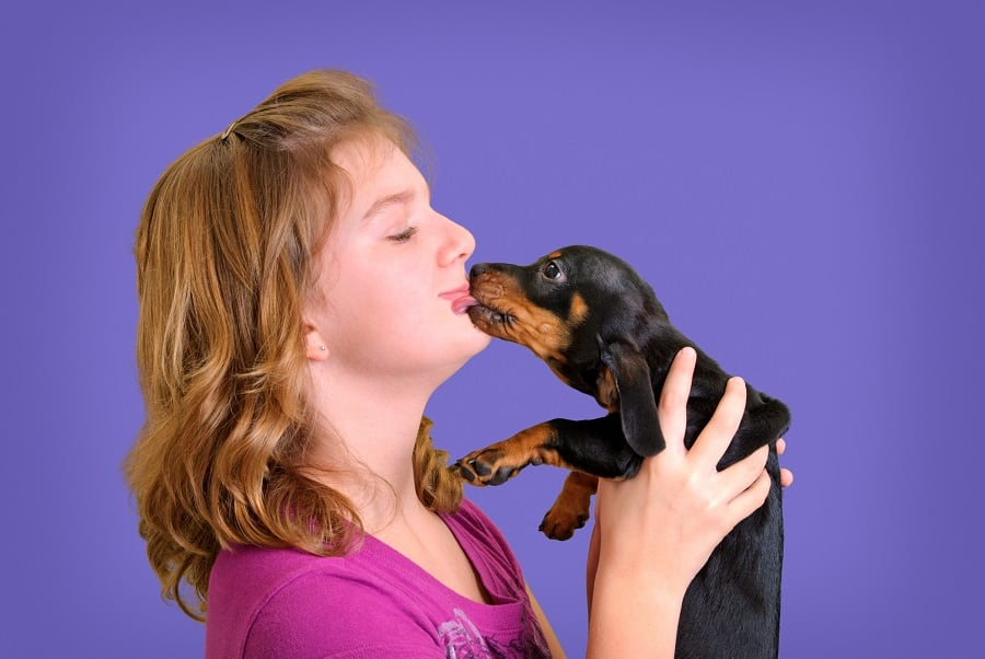 Daschund licking the mouth of it's owner
