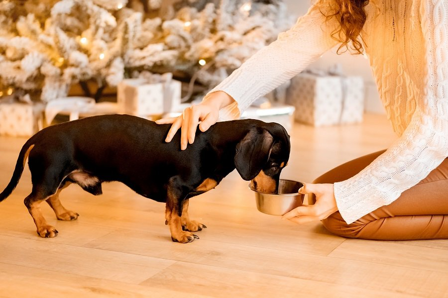 Care Requirements for a Growing Dachshund