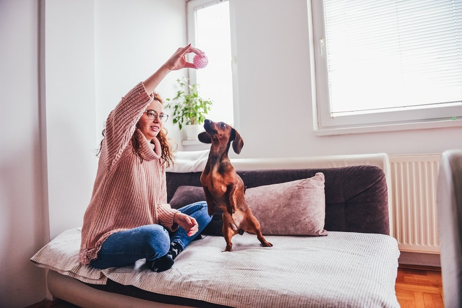 Adult girl playing with her dachshund dog