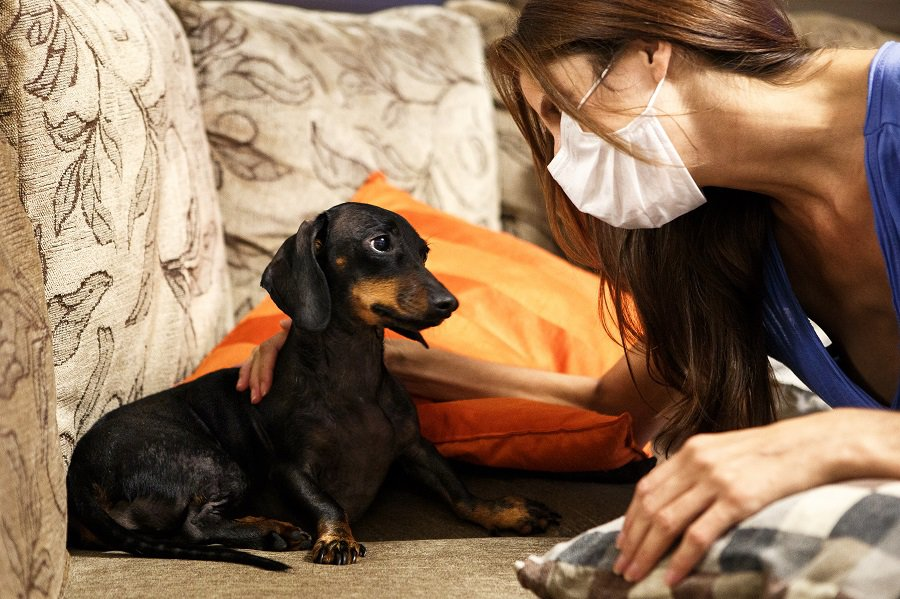 Allergic owner reuniting with her dachshund