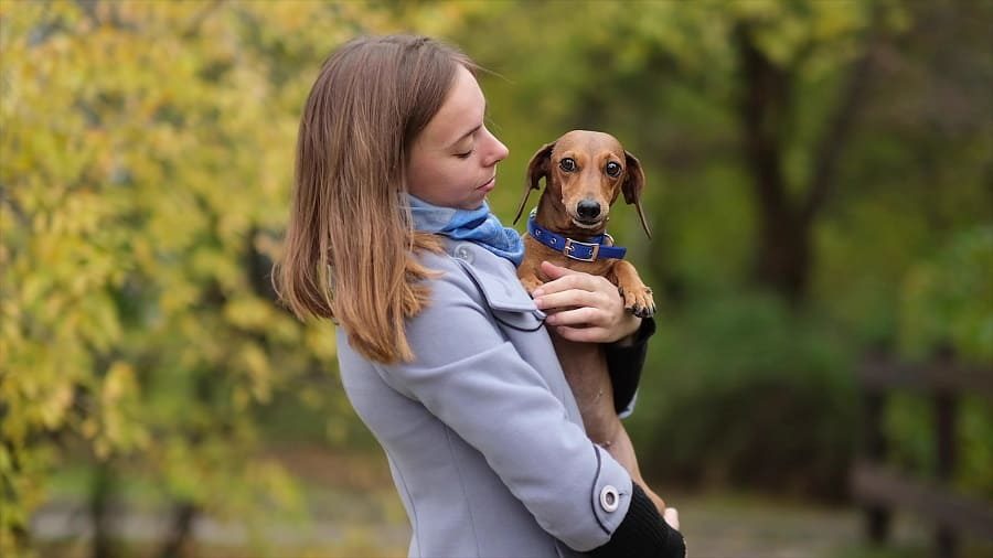 young woman hugs her little dschshund dog