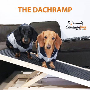 Two dachshunds on ramp