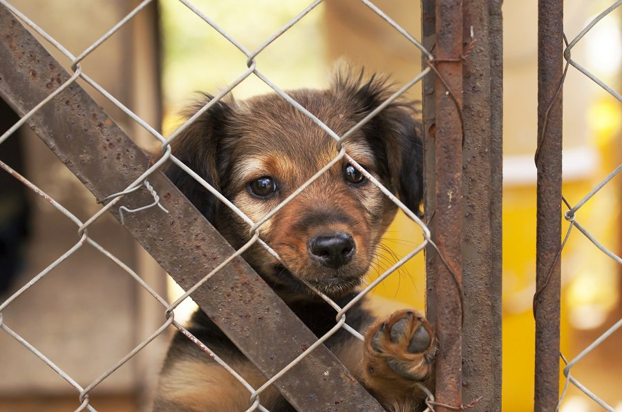 Lonely dachshund puppy looking behind a fence in a shelter