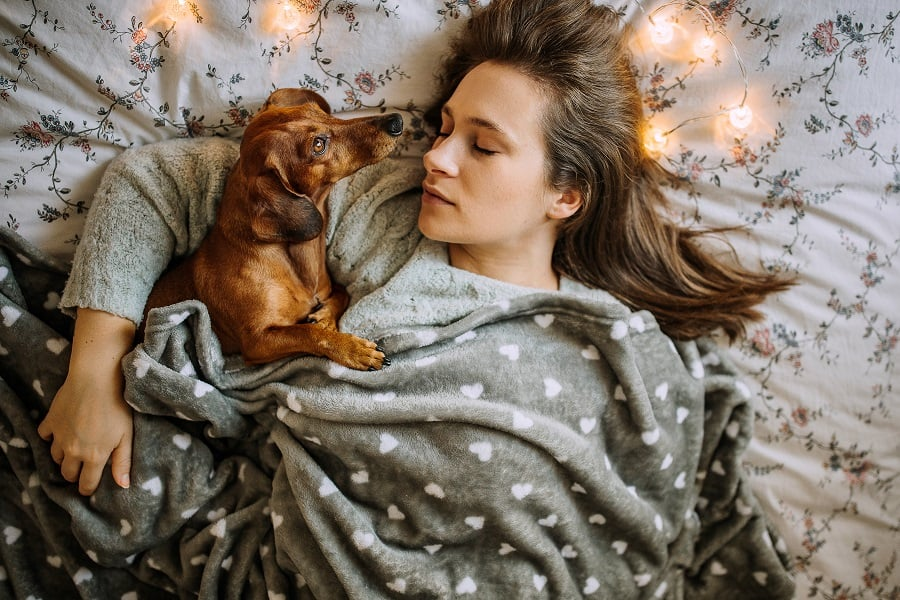 Pretty Young Woman Sleeping With Her Beautiful Dachshund in Bed