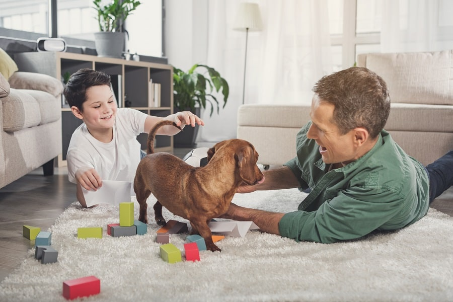 dachshund's being loyal and playing with more than one person