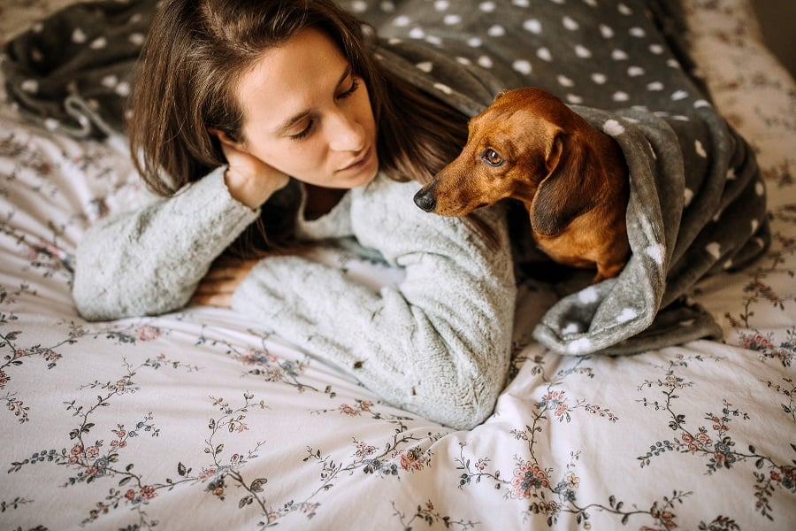 Woman and dachshund communicating in bed under blanket