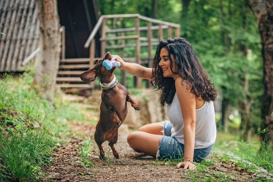 loyal dachshund playing with owner