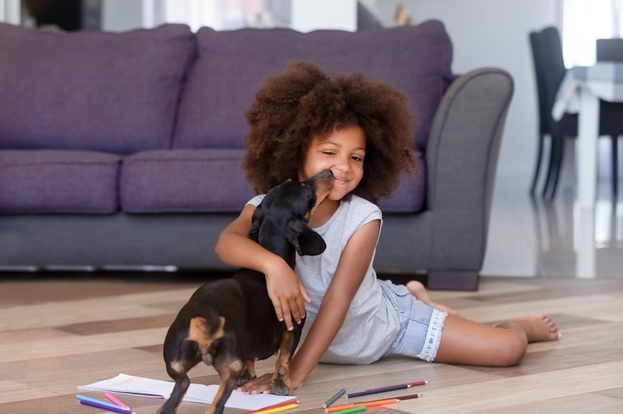 miniature dachshund playing with little girl