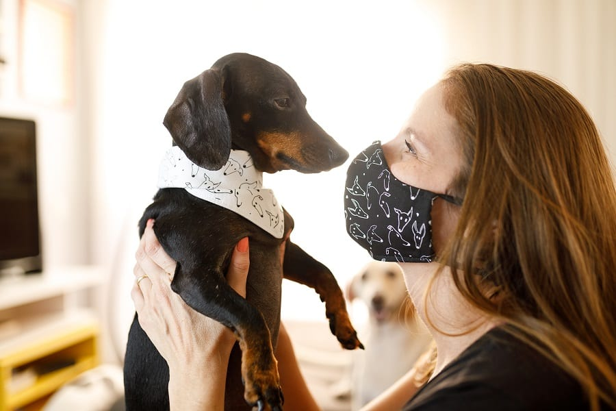 showing love and compassion to your dachshund to make them less jealous